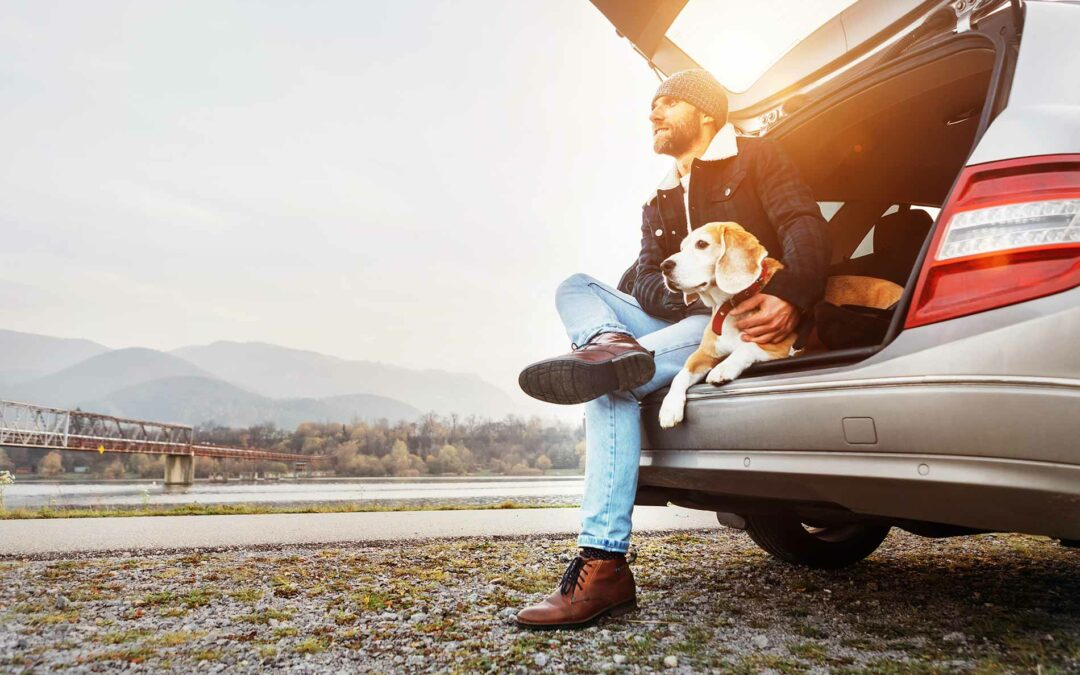 How to Keep Your Pet Safe in the Car